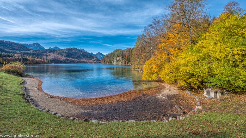 herbstlich farbenfrohe Bäume am Ufer des Alpsees