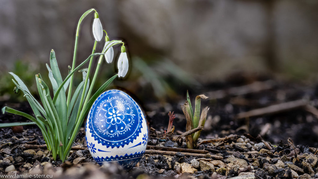 ein weiß-blau bemaltes serbisches Osterei unter einem Schneeglöckchen