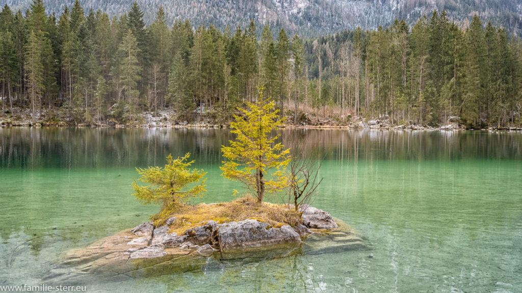auf einem kleinen Felsen im Hintersee stehen ein paar kleine Bäume