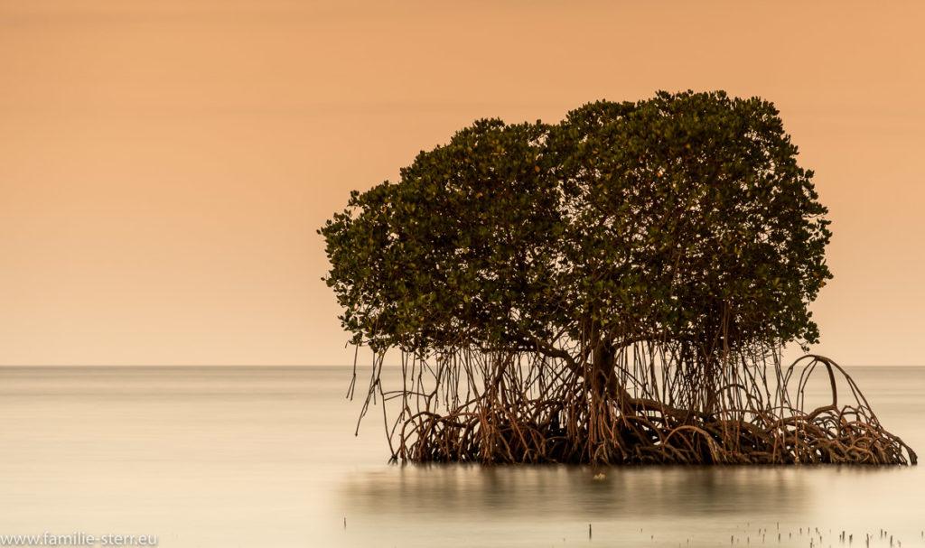 Mangrove im Sonnenuntergang im Meer vor Bali